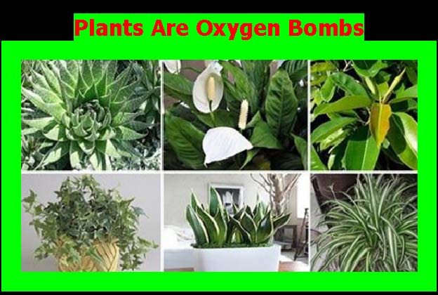 Plants_Are_Oxygen_Bombs.jpg
